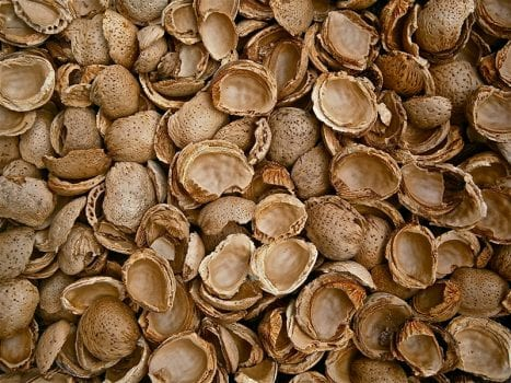 https://www.tranpak.com/wp-content/uploads/2019/10/almond_shells-e1572374463914.jpg